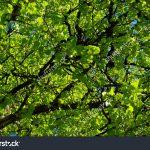 Glifosato, erbicidi e…i nostri giardini