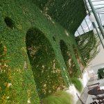 Visiting Villa del Grumello